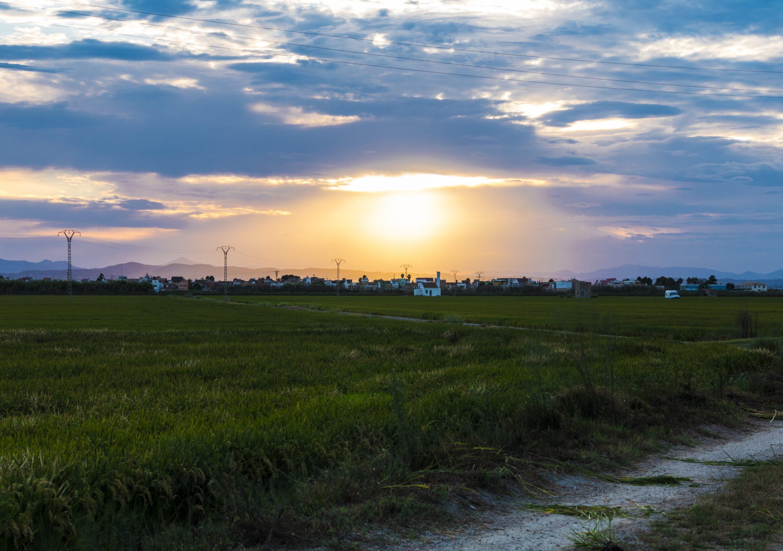 atardecer en los arrozales albufera